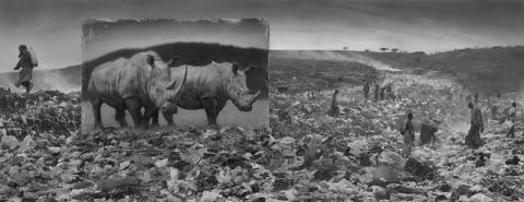 Wasteland With Rhinos