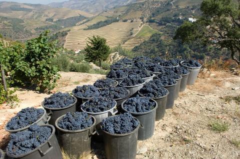 Rödvin från Portugal