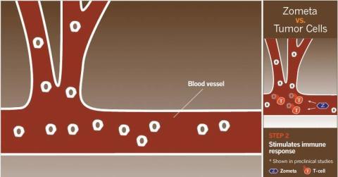 Zometas skyddande egenskaper, grafik 2