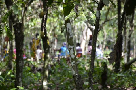Cocoa Life Environment