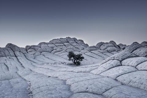 Tom Jacobi,  Lonely Tree