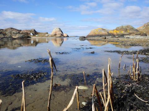 Havet utanför Lovéncentret Kristineberg i Fiskebäckskil