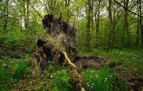 Verdens Skoves forslag om et biodiversitetsråd taget i Folketinget.