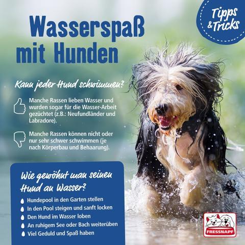 Infografik: Wasserspaß mit Hunden