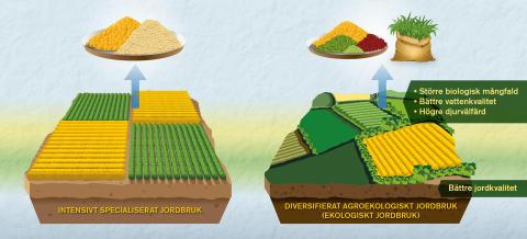 Jämförelser mellan ekologiskt och konventionellt jordbruk behöver bli bättre, enligt forskare