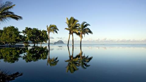 Mauritius_Palmier_Le Morne©MTPA_Bamba