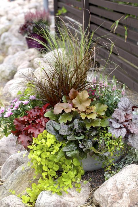 Höstkruka med blandade växter