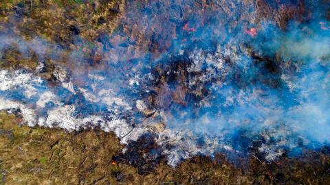 Soja-gigant bag store skovødelæggelser blokerer for bedre beskyttelse af tropisk skov