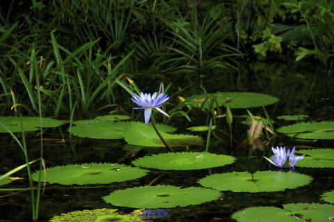 Pond dipping at Hollingworth Lake