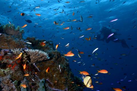 Yadegar Asisi im Great Barrier Reef