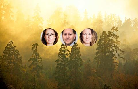 De är nominerade till SunPines Hållbarhetspris!