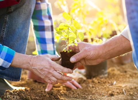 Plantagens butiker öppnar tidigare för riskgrupper i coronatider