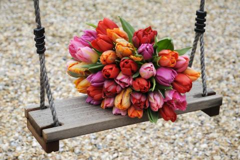 Tulpaner på gunga