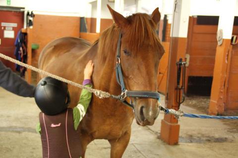 5 000 skolbarn ska få uppleva häst under 2013