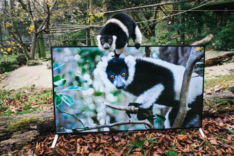Lemur and Sony 4K TV