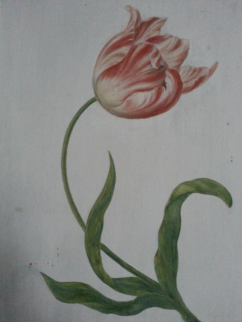 Tulpan avbildad på en dörr på Skoklosters slott