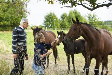 Pengar att söka för att utveckla rådgivningskoncept till företag inom hästnäringen