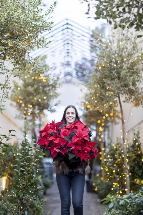 Kvinna med julstjärnor