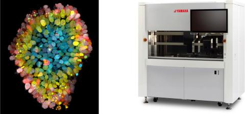 Hubrecht Organoid Technology との共同研究開始について メディカル・バイオ領域の技術開発を加速