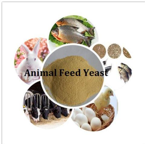 Animal Feed Yeast Market Report 2018 To 2023 | Top Players Including Alltech, Angel Yeast, Cargill, ADM, Nutricorn