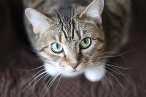 Att köpa kattunge - 7 tips från Mjau