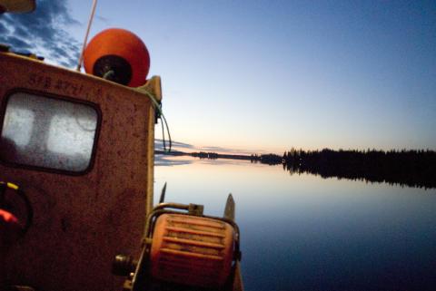 Provfiske antyder normalår för Kalixlöjrom