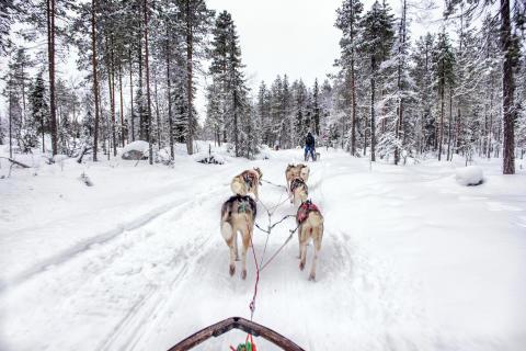 Vinteräventyr hundspann