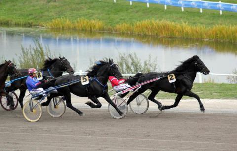 Nytt om arvsanlag som påverkar hästars gångarter och prestationer