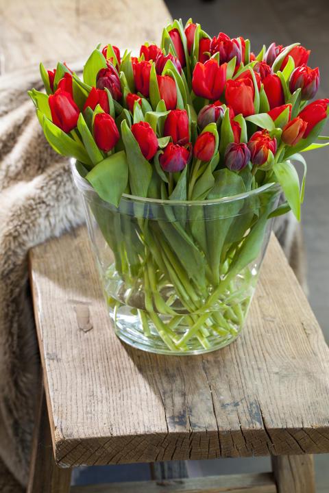 Tid för tulpaner!