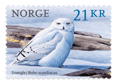 Snøugla pryder verdens vakreste frimerke 2018.