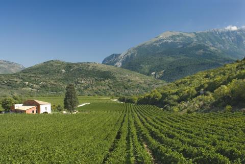 Ekologisk succé från Valle Reale - nu till lägre pris!