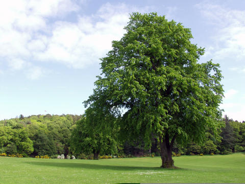Moray Grant Park