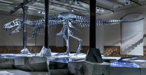 "Skjelett av Tyrannosaurus rex ""Tristan Otto"", Museum für Naturkunde Berlin"