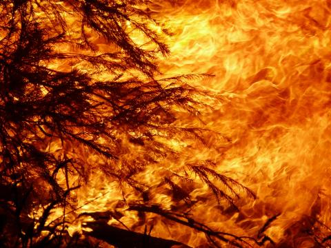 Lions Norge gir 250.000 kroner til brannrammede i Australia