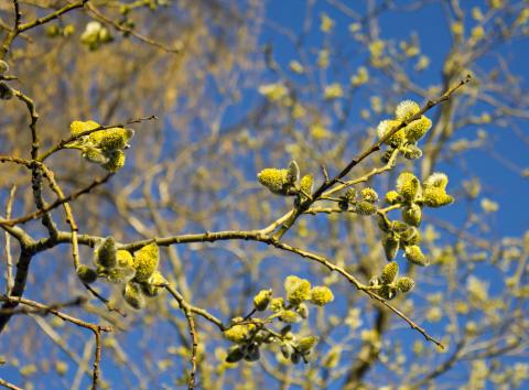 Var femte svensk lider av pollenallergi – tio bästa tipsen för att klara pollensäsongen