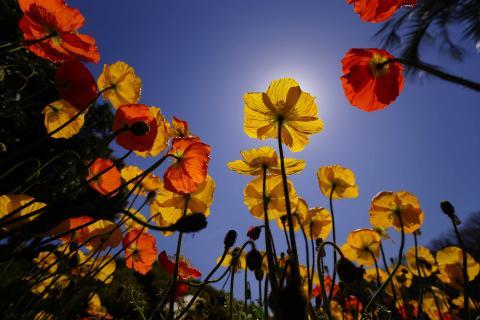 Beispielfoto SAL-1635Z2_A99 von Sony