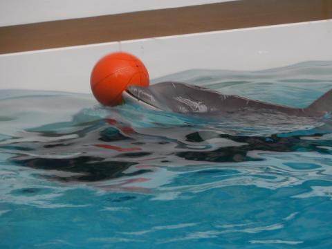 Tierschützer sorgen sich um Delfin-Kalb und kündigen weitere Belege einer illegalen Delfinhaltung in Nürnberg an