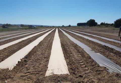 Smurfit Kappa kombinerar hållbarhet med innovation och skapar revolutionära AgroPaper
