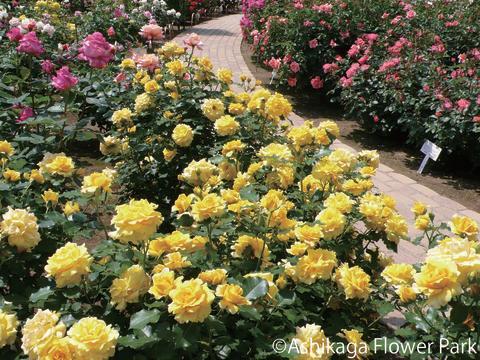 Ashikaga Flower Park(8)