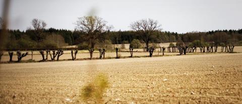 Allvarliga följder för lantbrukets lönsamhet i torkans spår