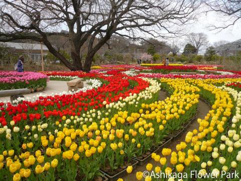 Ashikaga Flower Park(7)