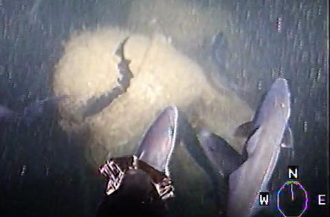 Ny studie visar: Spår av kemiska stridsmedel i fisk och skaldjur vid Måseskärsvraken