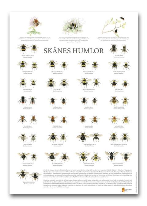 Ny affisch med Skånes samtliga humlearter