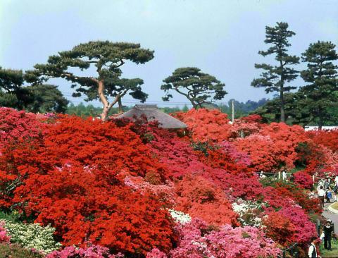 Tsutsujigaoka Park(3)