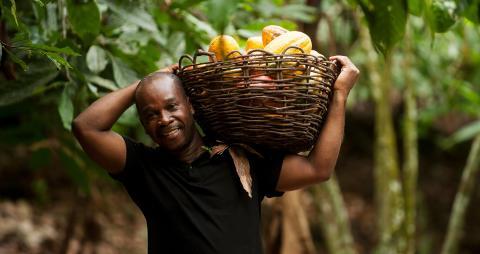 Höjda inkomster för kakaoodlare med Fairtrades nya minimipris