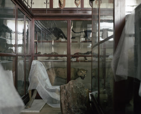 Tommaso Rada, Anatomy of a Museum 1