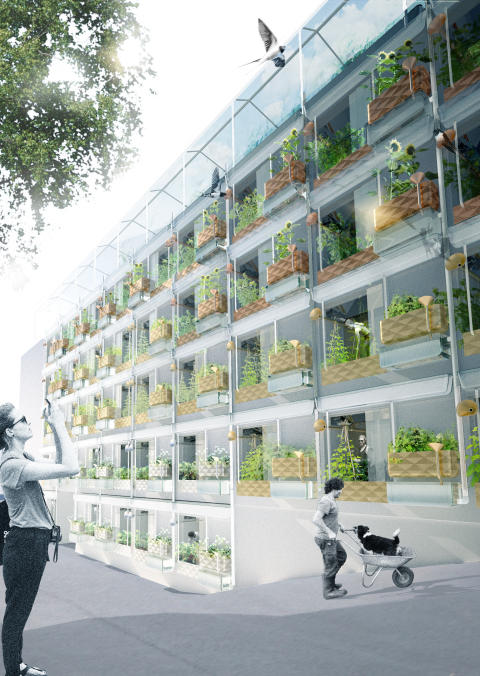 Biophilia: Urban Farming