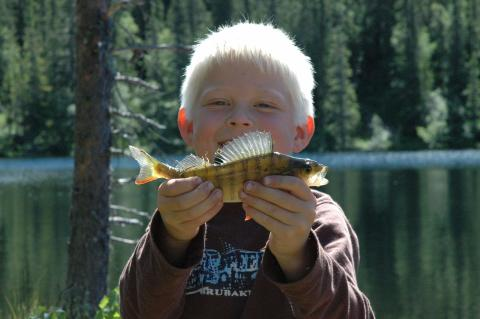 Gratis fiskelykke til de yngste