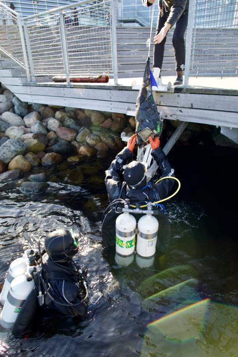 Dykkere samler skrald fra Øresund.