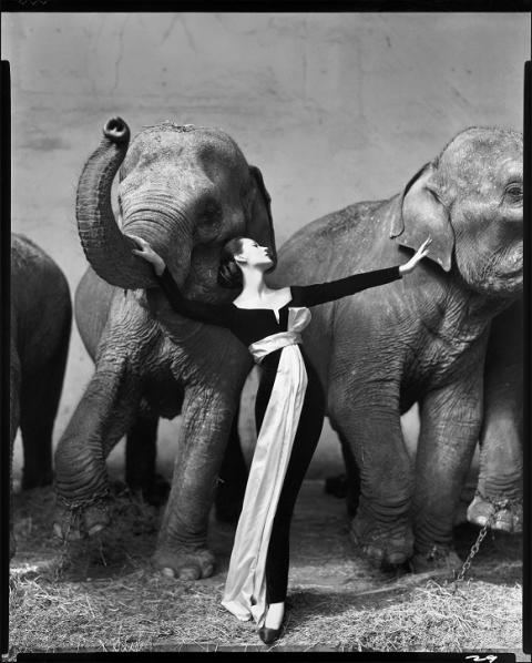 Dovima with Elephants, evening dress by Dior, at Cirque D'Hiver, Paris, August, 1955. Photograph by Richard Avedon © The Richard Avedon Foundation
